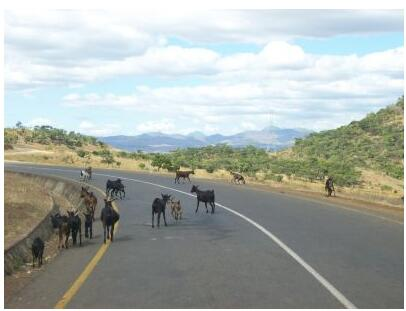 Traffic obstacles near Dedza