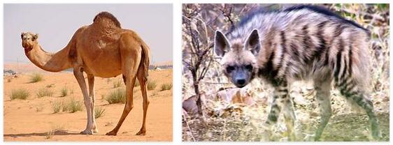 Saudi Arabia Animals