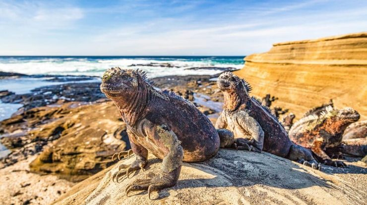 On Adventures to Machu Picchu, Galapagos and Cotopaxi